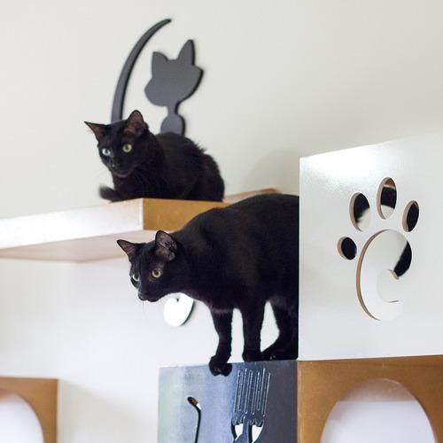 para gatos para gatos