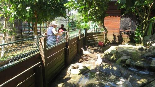 para inversionistas, el zoológico más vistoso#17-6456**gg**