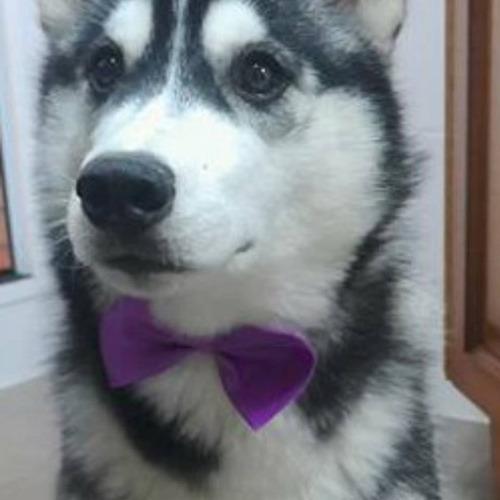 para mascota perro accesorio,