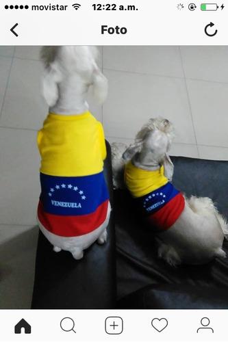 para mascotas ropa