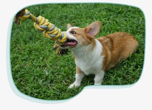 para perro juguete