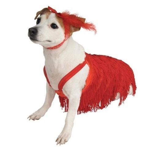 para perro perro mascotas