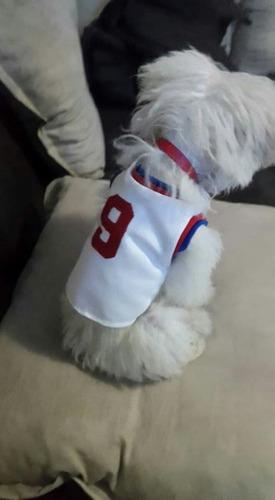 para perro ropa