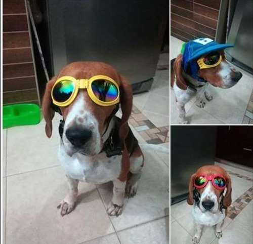 para perros mascotas