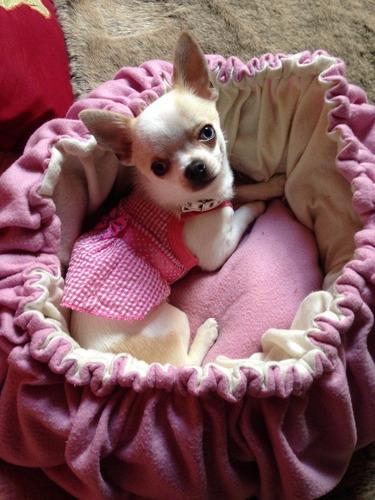 para perros vestido ropa