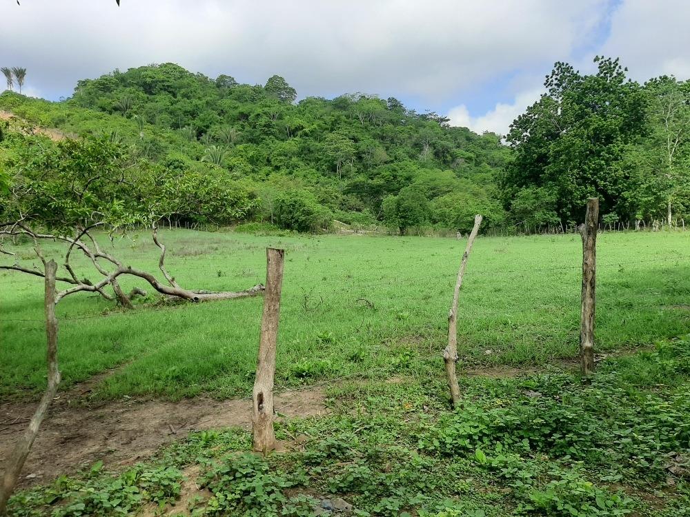 parcela 6 hectáreas