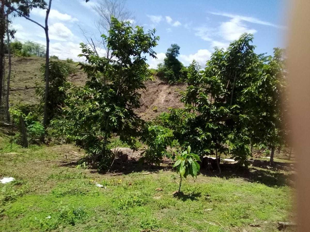 parcela de 14 hectáreas con cacao y vivienda