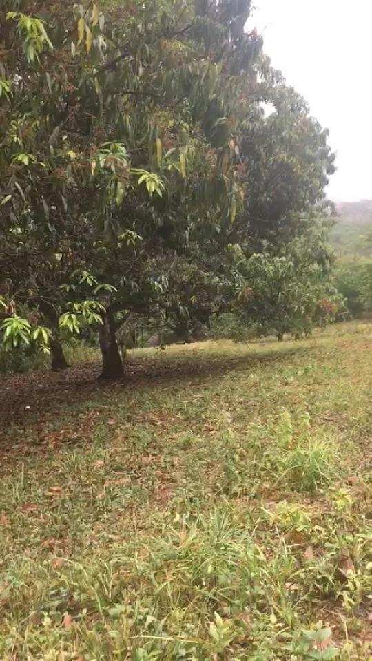parcela de tierra lote cerca la horqueta vía viotá tocaima
