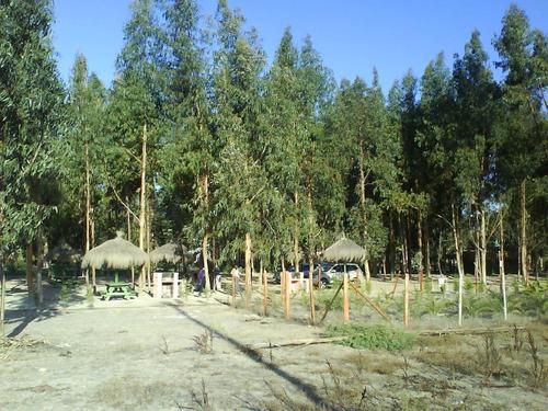 parcela foresta de zapallar