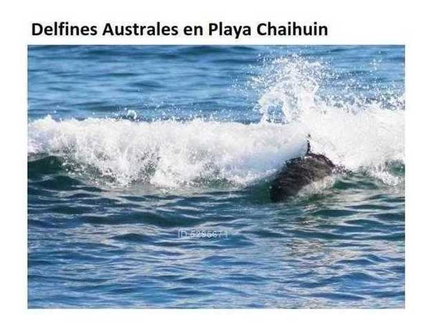 parcelas en chaihuin - frente al mar