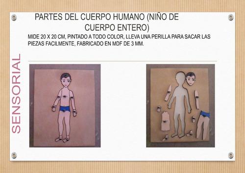 partes del cuerpo humano montessori