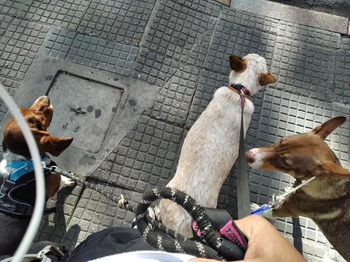 paseador de perros hyr paseos caninos