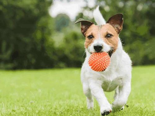 paseador de perros profesional.