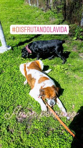 paseadora, cuidadora y hospedaje canino.