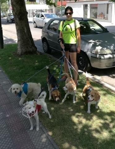 paseadora de perros a domicilio dedicación amor a los perros