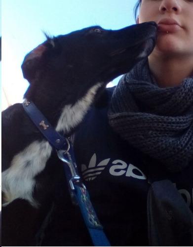 paseadora de perros caballito/boedo/almagro/ pque centenario