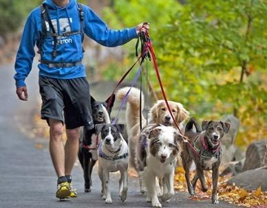 paseadoras de perros zona nuevo centro y prado
