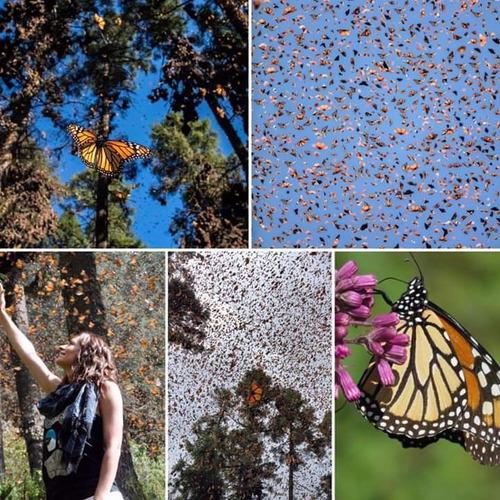 paseo a mariposa monarca