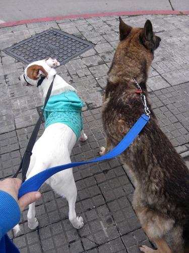 paseo de perros / p. batlle - pocitos - p. rodó - y más.