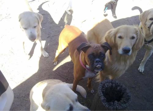 paseo y guardería de perros