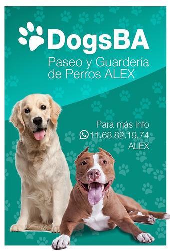 paseo y pension de perros