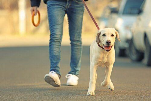 paseos de caninos