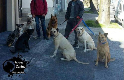 paseos y actividades caninas paseadores de perros montevideo