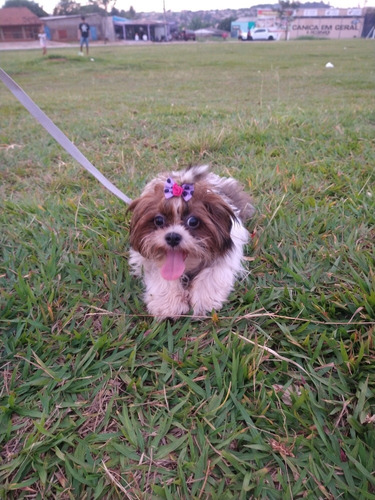 passeador cães / dog walker