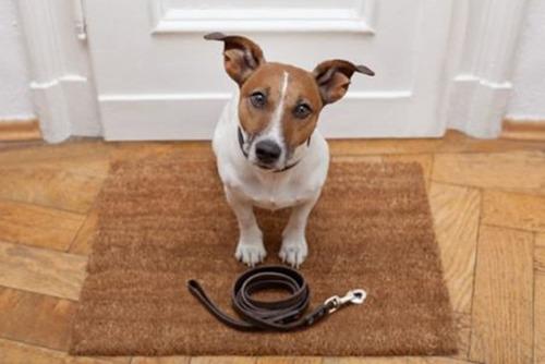 passeador de cães