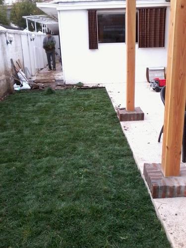 pasto alfombra - pasto en rollo, venta e instalación