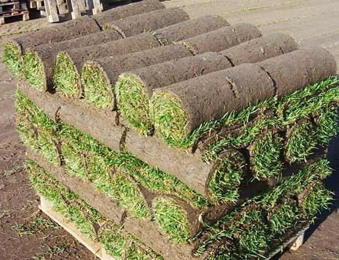pasto alfombra pasto en rollo venta e instalación productor