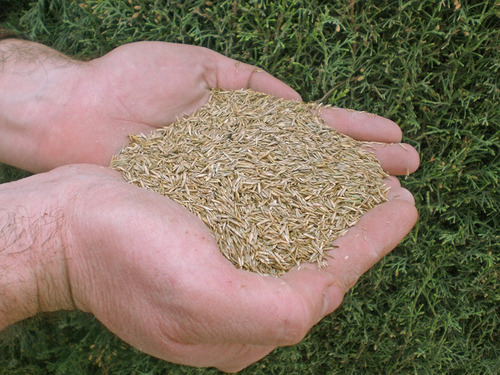 pasto de frío mezcla de semillas importadas