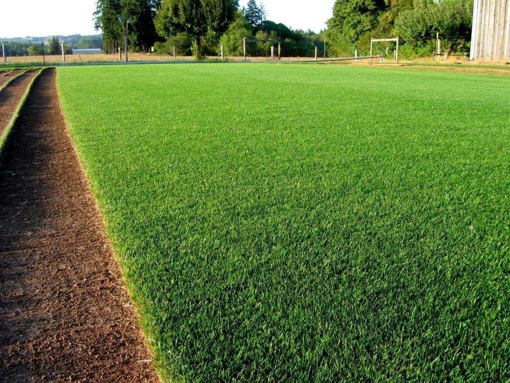 Pasto grama clima fr o semillas en mercado libre - Semillas de cesped para jardin ...