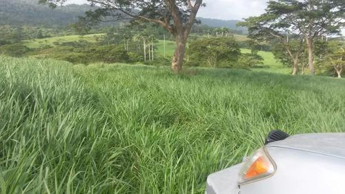 pasto mulato ii hibrido de semillas papalotla envase 2 kg
