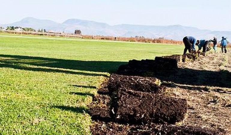 Pasto natural en rollo tipo alfombra de la mejor calidad en mercado libre for Alfombras de buena calidad