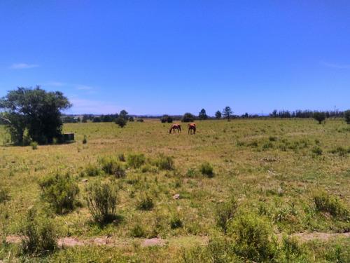 pastoreo para equinos a campo natural.
