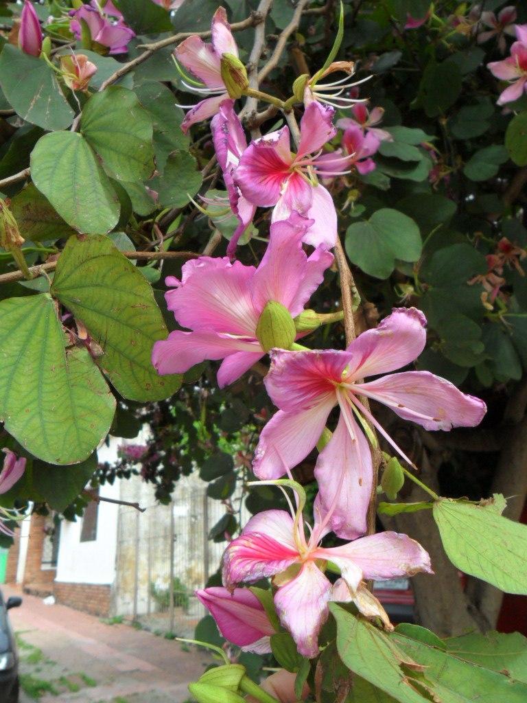 orquideas que se dan en arboles
