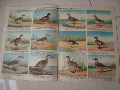patos aves argentinas y americanas 1 parte poster lamina