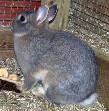 pdf conejos manual pie de cría reproductores pdf venta