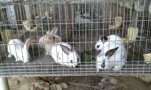 pdf guia conejos