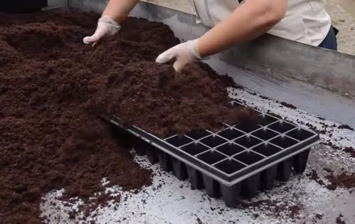 peat moss o turba - hidroponia - invernaderos - sustrato