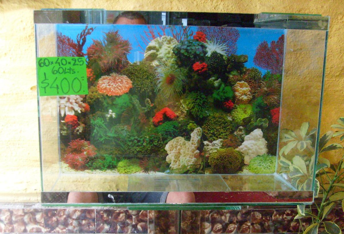 Pecera 60 litros peces mascotas acuario con for Peceras con peces