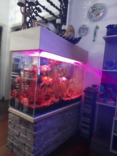 pecera completa 100x60x40 250ltr.aprox 6 peces grandes