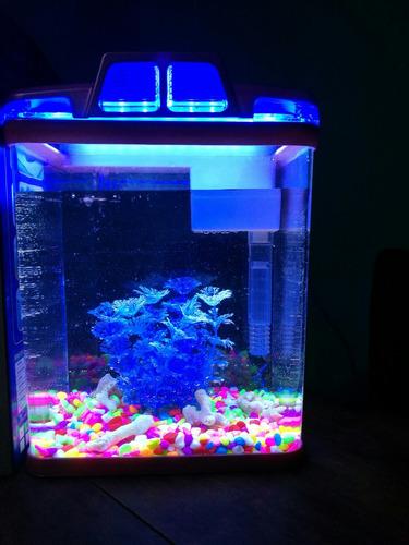 pecera led 6 litros+filtro+cascada+oxigeno+decoracion