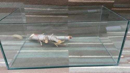 pecera reptilario vidrio grueso