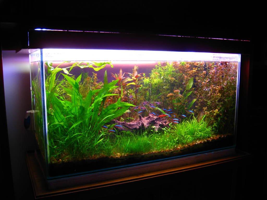 Pecera totalmente equipada para acuario plantado 1 en mercado libre - Pecera de pared ...