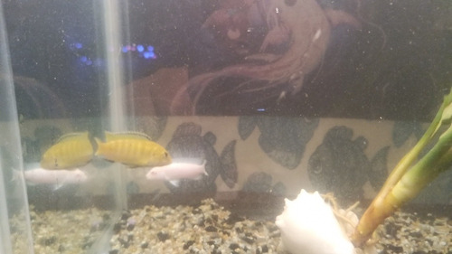 peces varios