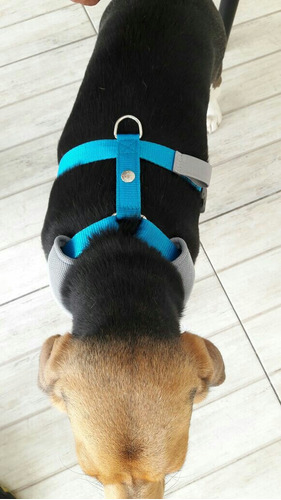 pechera beagle