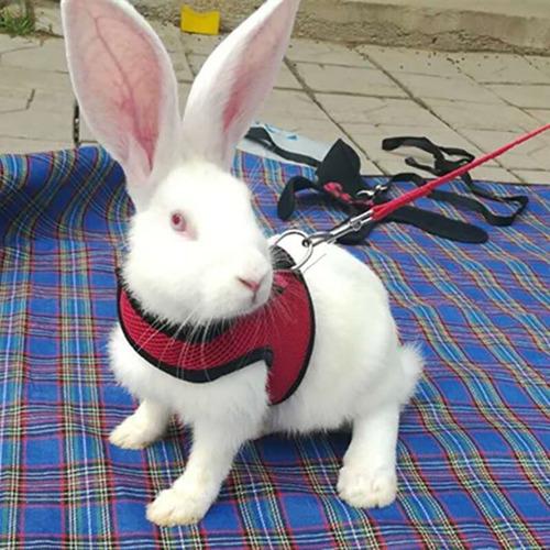pechera + correa conejos, cobayos. máxima calidad!