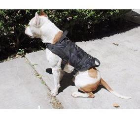 pechera táctica para perros. mayor y detal